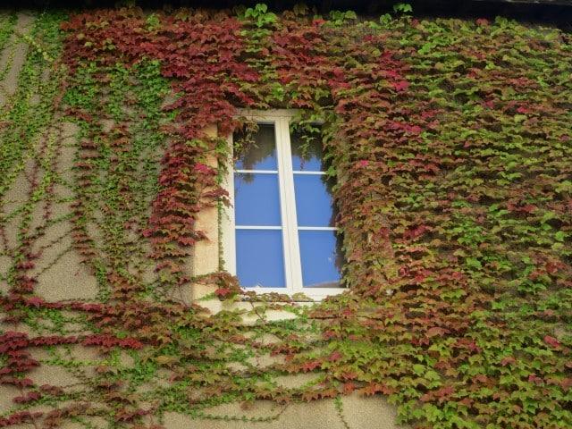 Window Vines Beaune Burgundy France