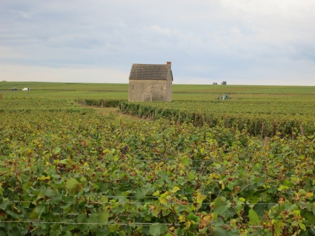 Burgundy Wine Tasting in the Cote d'Or France