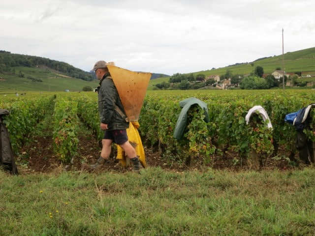 Burgundian Harvester in Burgundy France