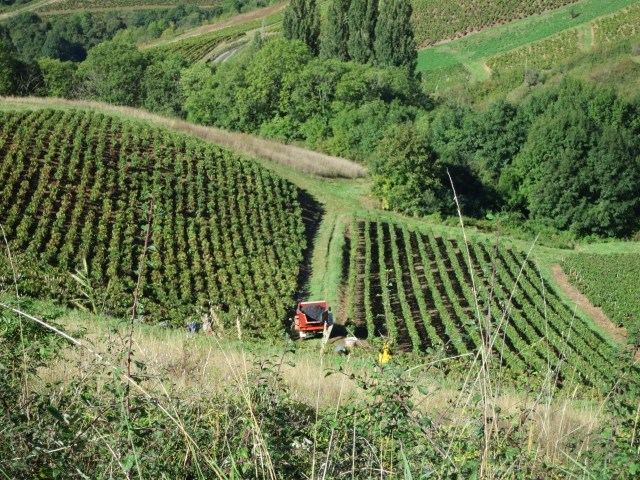 Vineyard in the Hills Beaujolais France