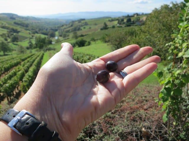 Tasty Roadside Grape Beaujolais France