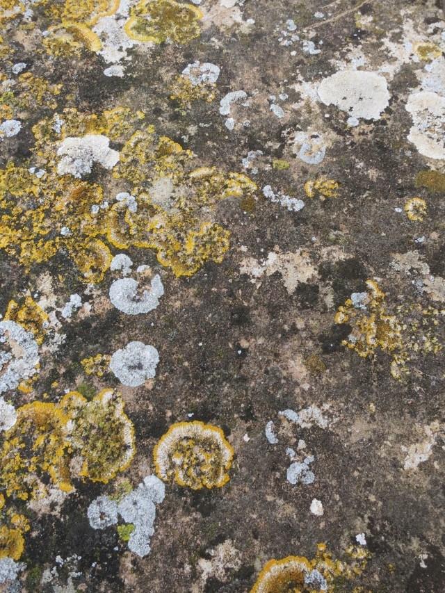 Limestone Beaujolais France