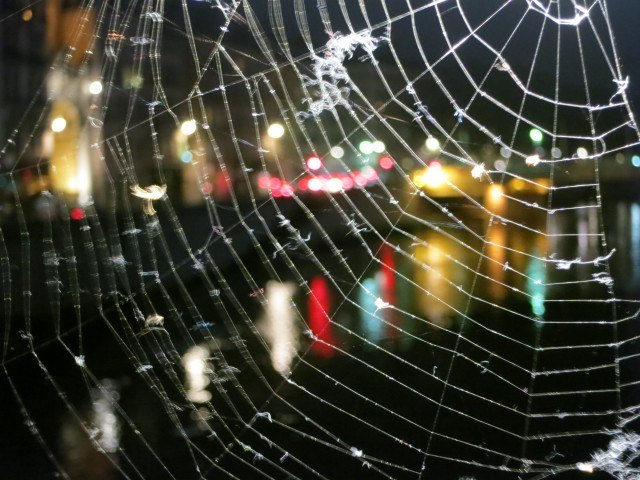Saône Lights through a Spider Web Lyon France