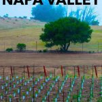 Pinterest image: image of vineyard with caption reading 'Wine Tasting in Napa Valley'