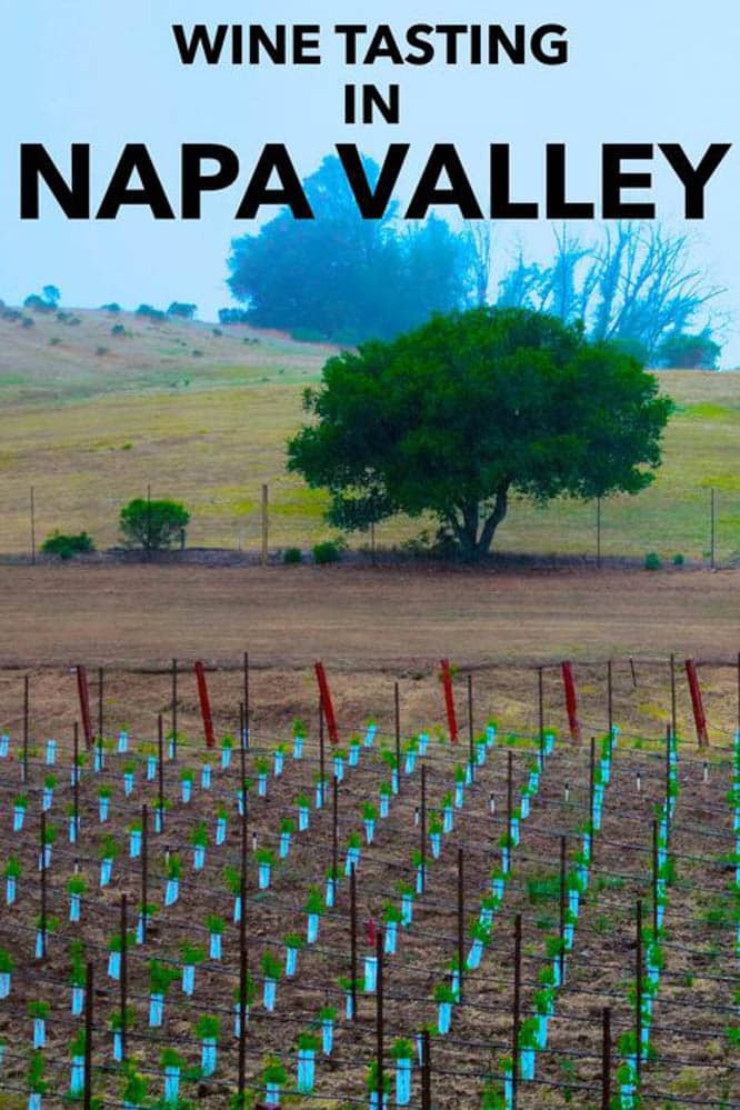 24 hours in Napa Valley is enough time to taste great wine and eat fantastic food.