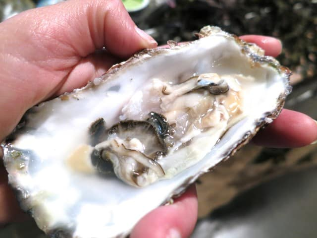 Atlantic Oyster - Fresh, Briny and Delicious