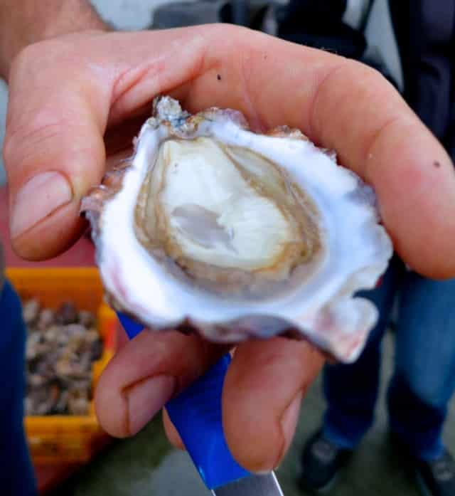 Shucked Oyster at Carlingford Oyster Company