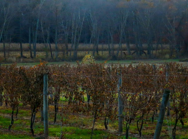 Armstrong Valley Vineyard and Winery Pennsylvania Wine Country