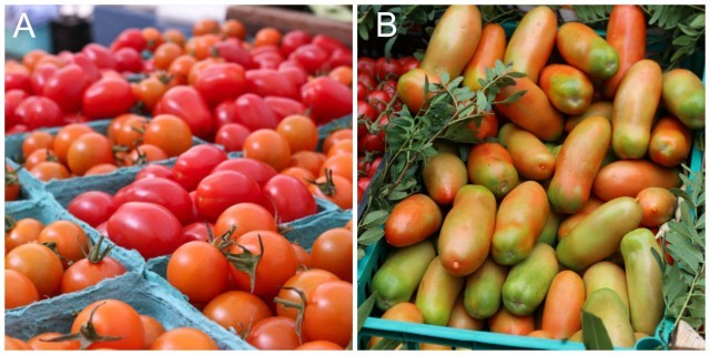 Tomatoes in Seattle and Napoli Italy