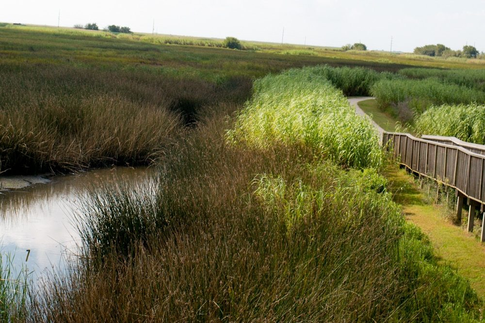 Wetland Walkway at the Sabine National Refuge- 7 Fun Things to do in Lake Charles Louisiana