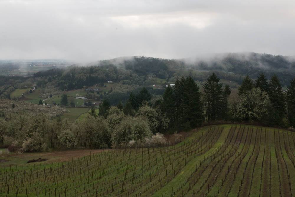 View at Youngberg Hill in Willamette Valley Oregon