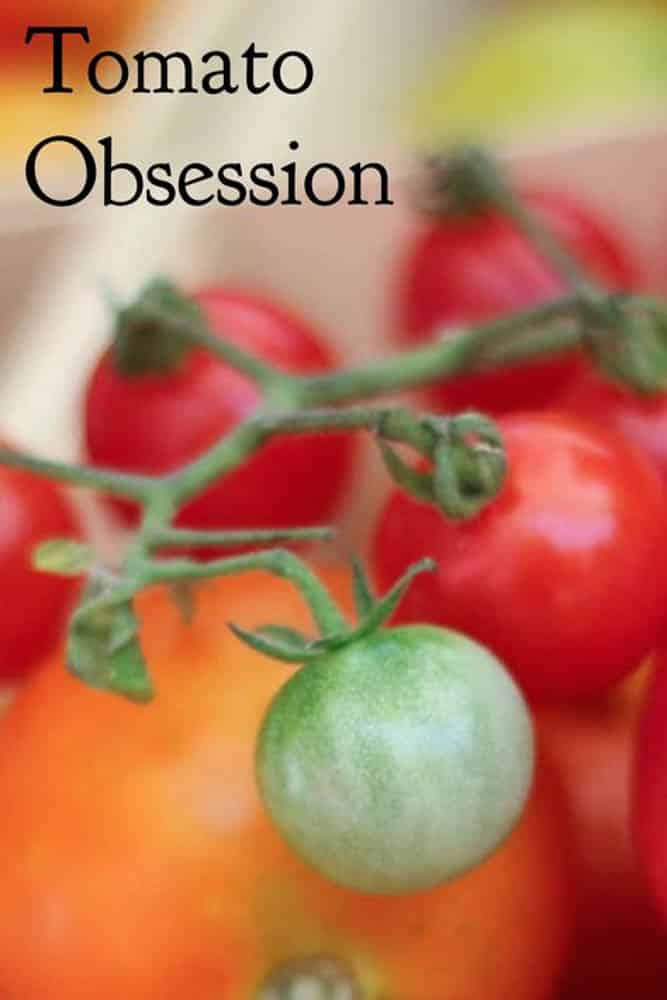 Pinterest image: image of tomatoes with caption 'Tomato Obsession'