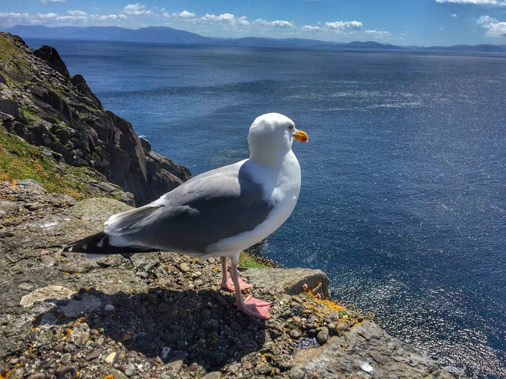 Just like our new friend, we could have stared into the Atlantic Ocean from Slea Head for hours. Ireland Road Trip