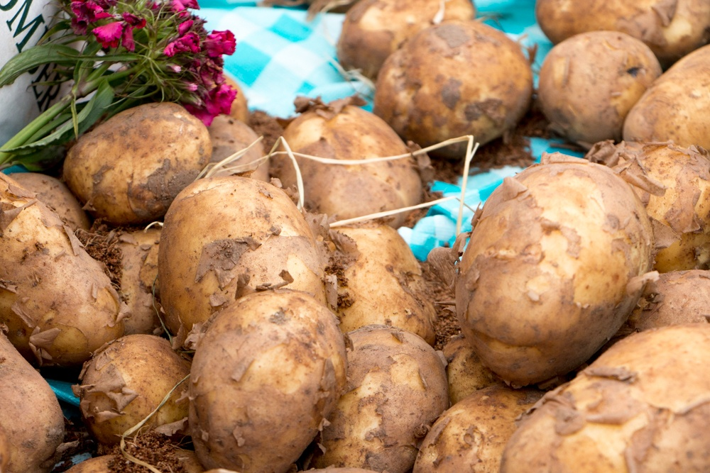 We tasted loads of potatoes at the Comber Potato Festival just a short bus ride from Belfast. This festival is just one of many events related to the Northern Ireland Year of Food and Drink 2016. Belfast Food Guide. Where to Eat in Belfast