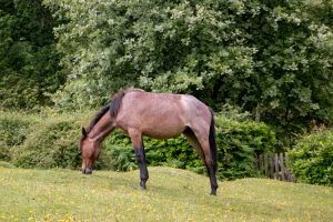 Pony in New Forest England