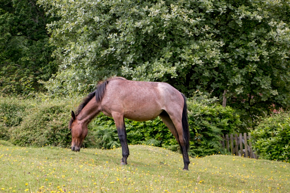 New Forest Getaway New Forest Pony