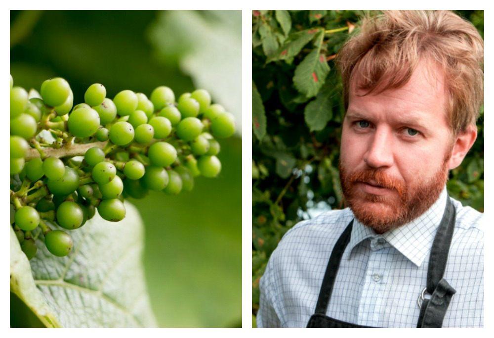 Sommalier Karl Sjöström introduced us to the grapes and wine at Hãllåkra Vingard. Gastronomic Tour of Southern Sweden in Skåne