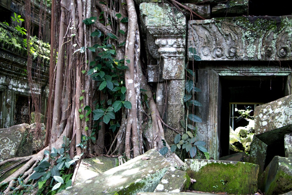 Ta Prohn is called the jungle temple for good reason. Trees have claimed this temple as its own. Cambodian Adventure in Siem Reap