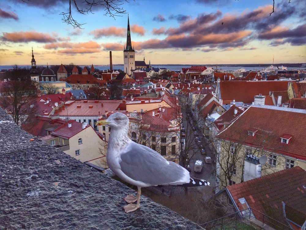 Bird's Eye View of Tallinn Estonia