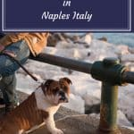 Pinterest image: image of dog with caption reading 'Pictures of Cats and Dogs Naples Italy'