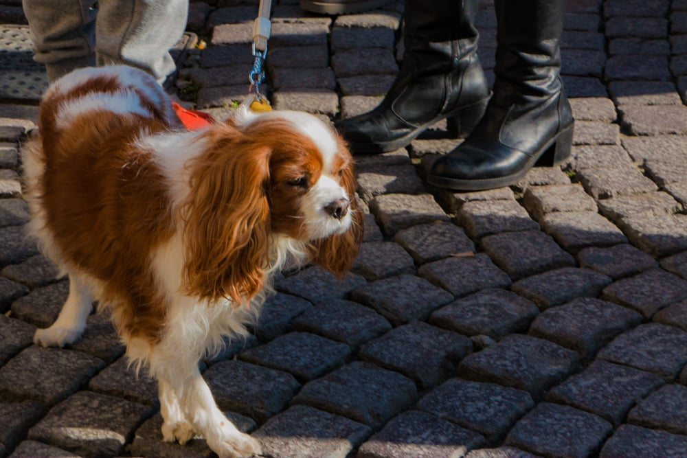 Stylish Puppy in Naples Italy