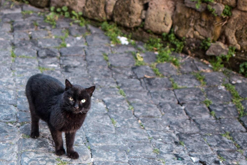 Black Cat in Naples Italy