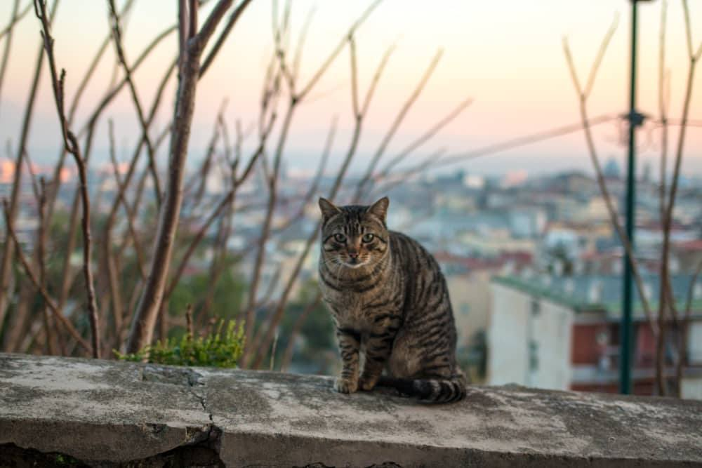 Cat on Ledge in Naples Italy