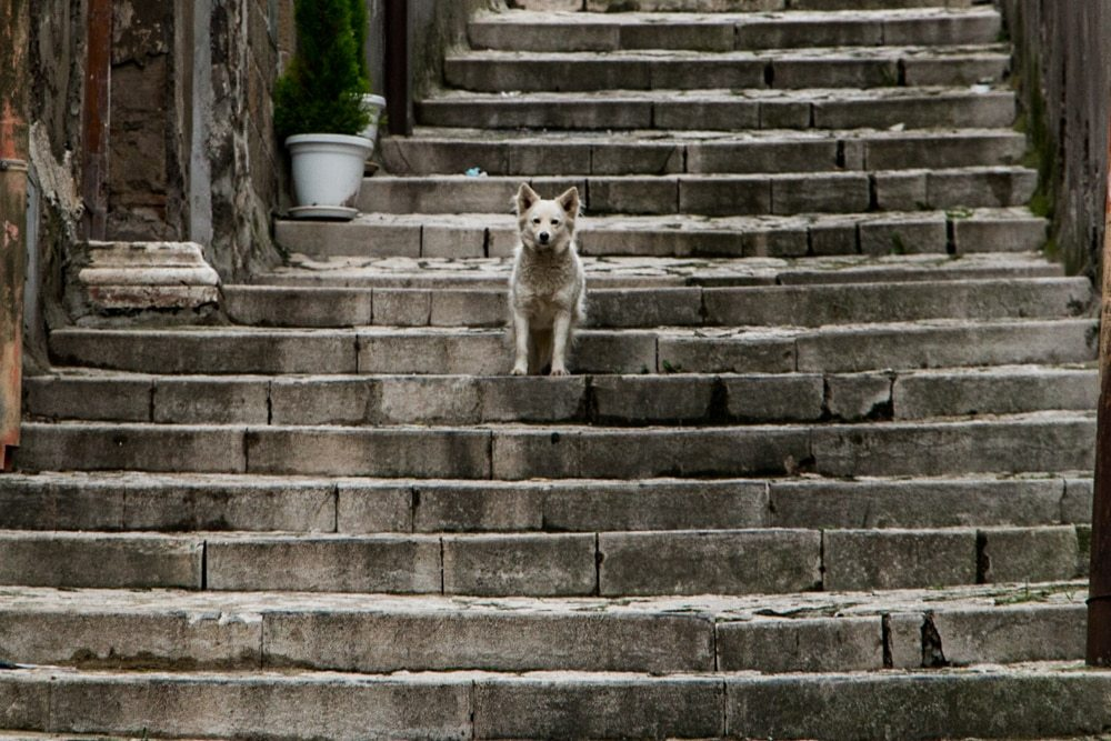 Dog on Stairs in Naples Italy
