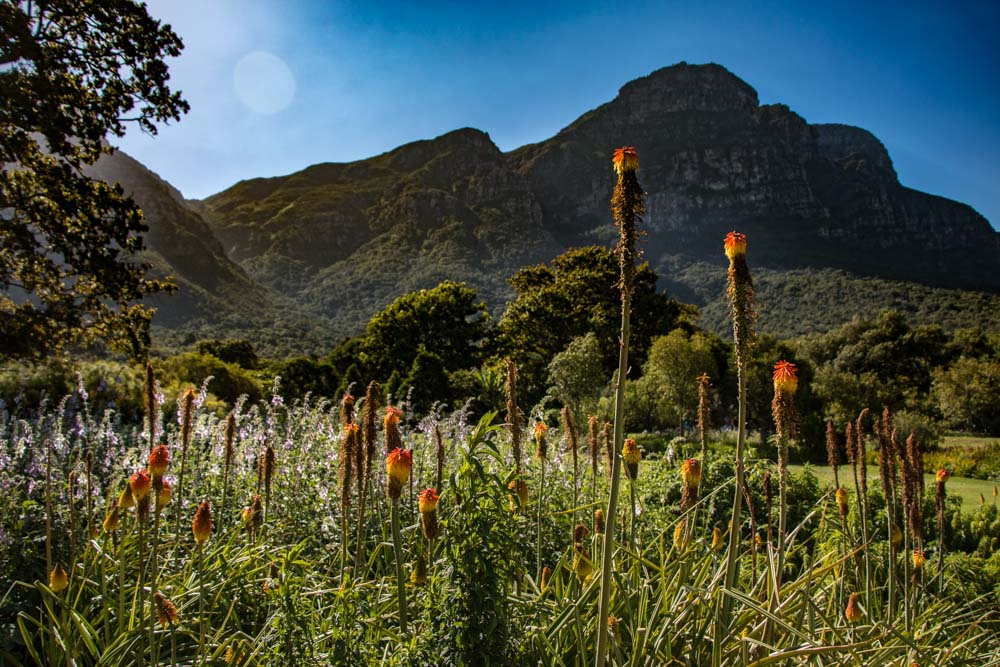Kirstenbosch Gardens - 25 Adventurous Things to Do in Cape Town for Non-Adventure Travelers