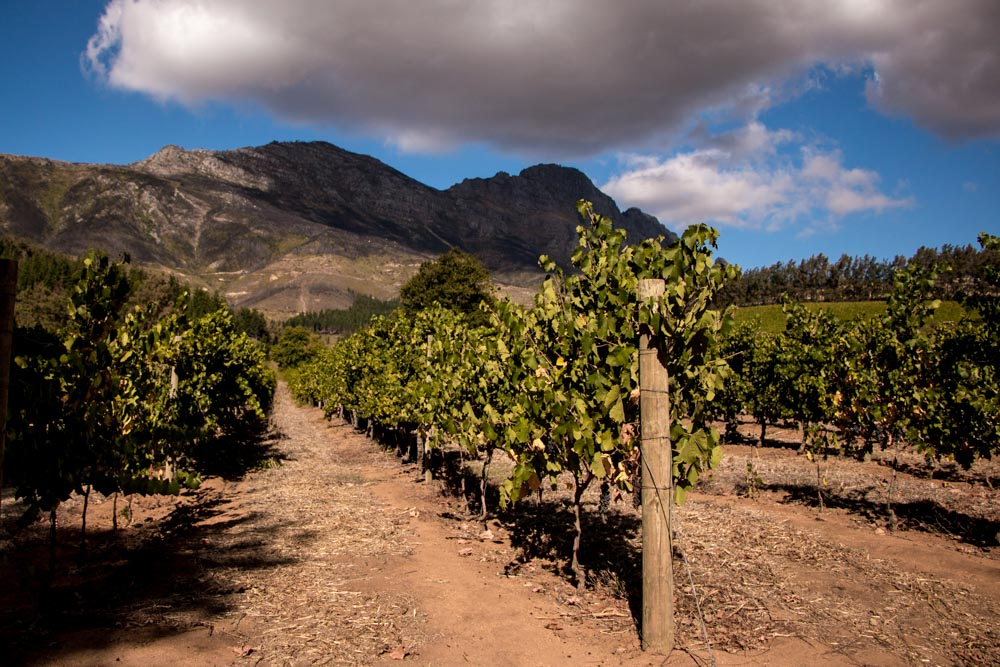 Stellenbosch Wine Route in Cape Town South Africa