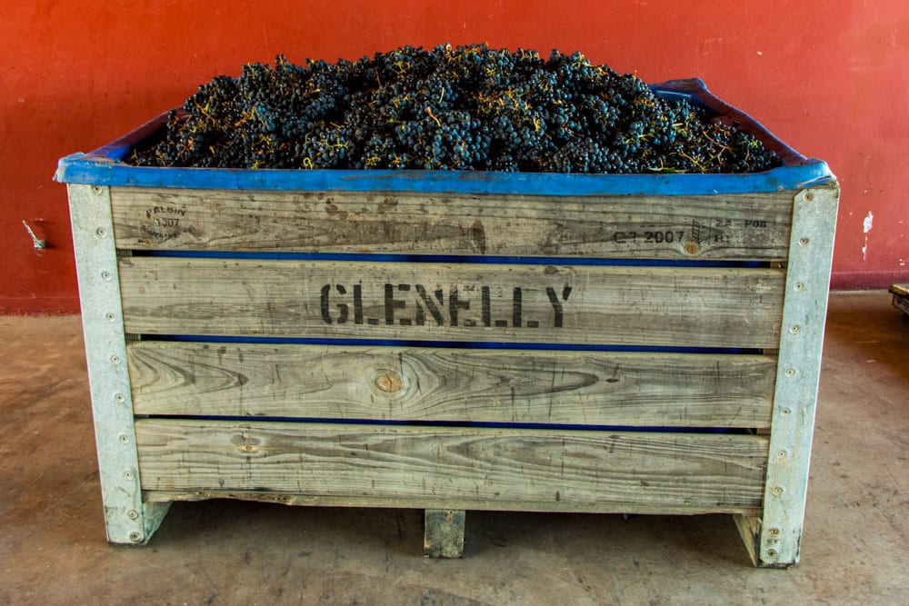 Grapes in Barrel at Glenelly Estate in Stellenbosch South Africa