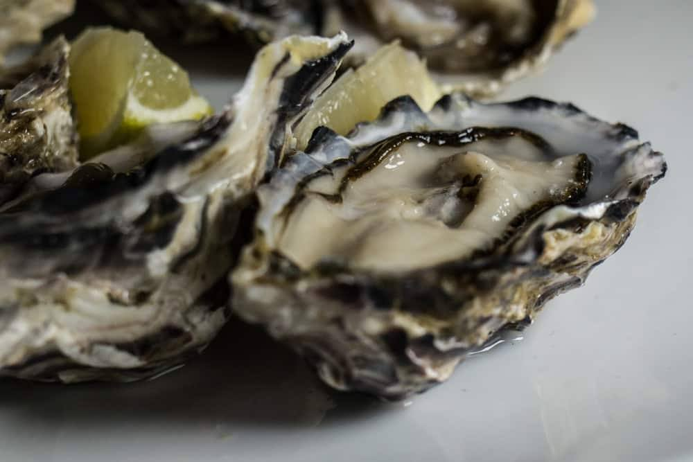 Oyster Bar - Stellenbosch Restaurants and Beyond - A Cape Winelands Food Guide