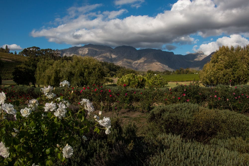Scenery at Peter Falke Wines in Stellenbosch South Africa