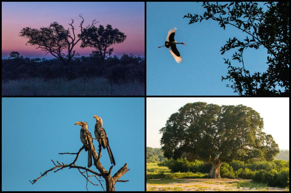 Birds and Scenery at Kirkman's Kamp in South Africa