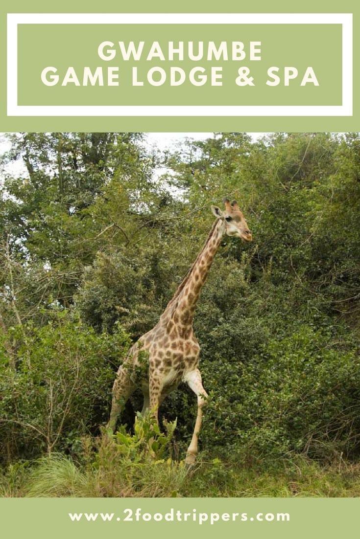 Gwahumbe Game Lodge and Spa | Safari | South Africa | African Safari | Kwa Zulu-Natal | KZN | Glamping #Gwahumbe #Safari #AfricanSafari #South Africa #VisitSouthAfrica