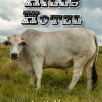 Pinterest image: image of cow with caption 'Brahman Hills Hotel'