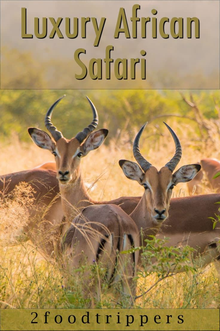 Pinterest image: image of impala with caption reading 'Luxury African Safari'
