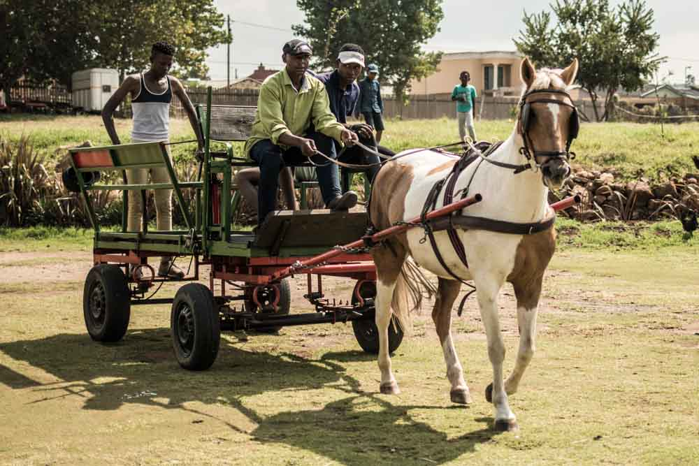 Soweto Horse Drawn Carriage - Soweto Tour