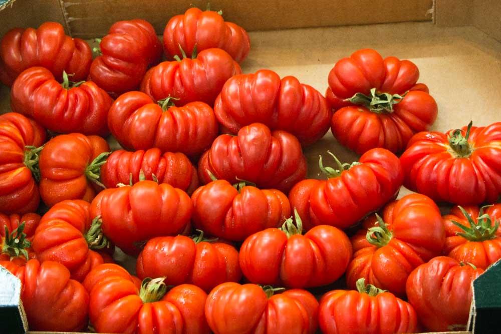 Market Tomatoes in Bologna Italy