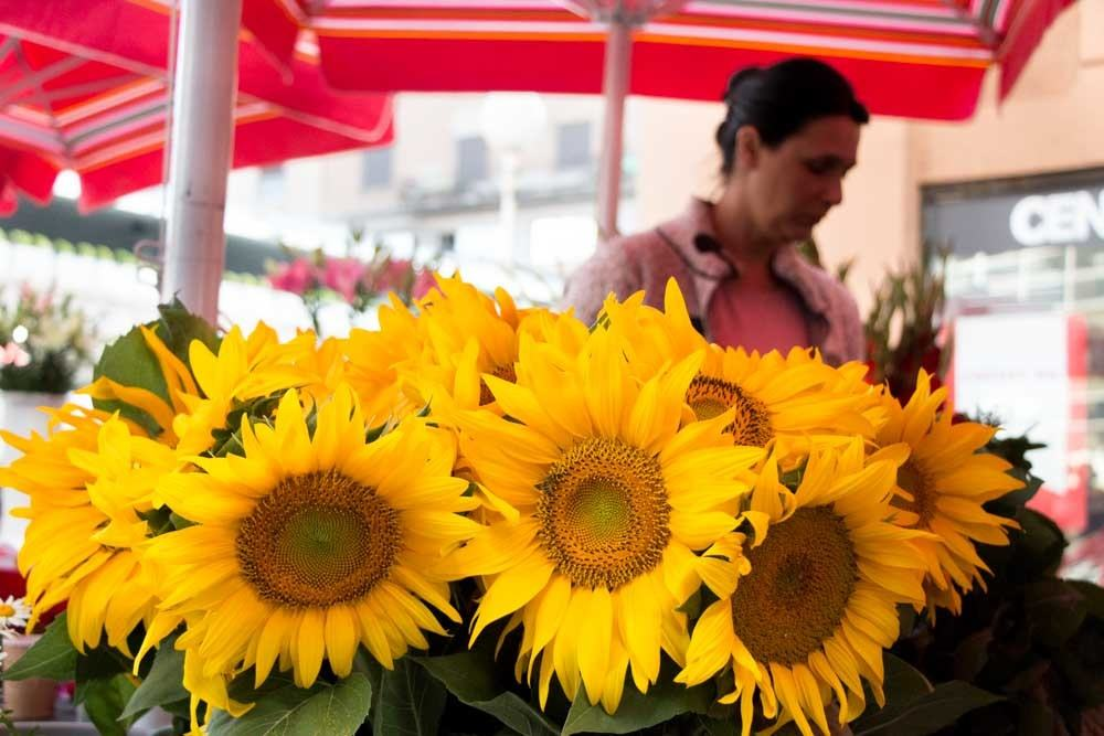 Sunflowers at a Market in Zagreb Croatia