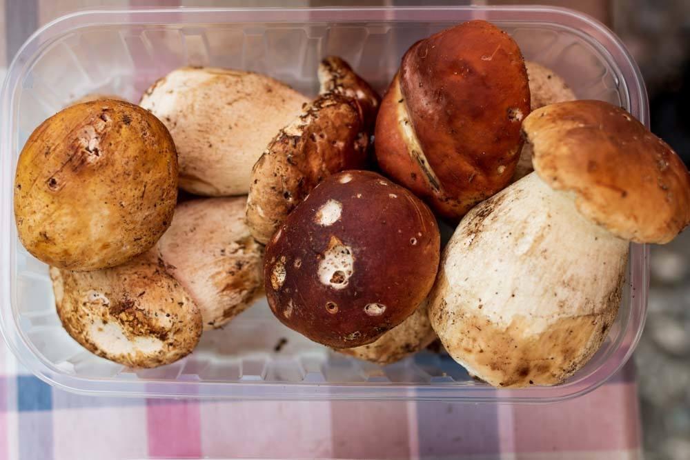 Porcini Mushrooms - Ljubljana Food