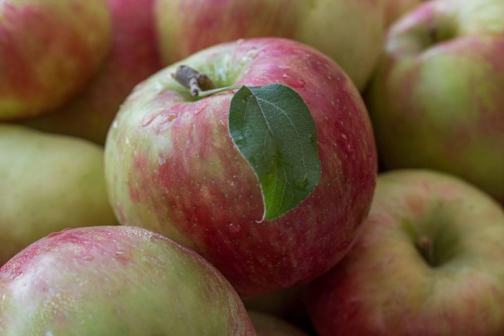 Apples at Headhouse Square in Philadelphia
