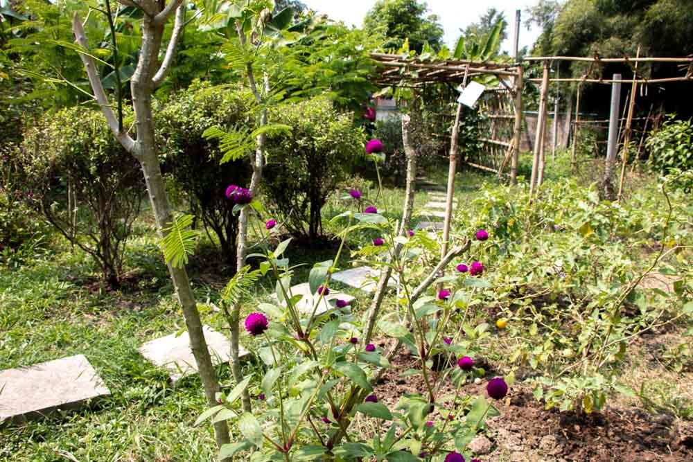 Love Chiang Mai Cooking Class - Organic Garden