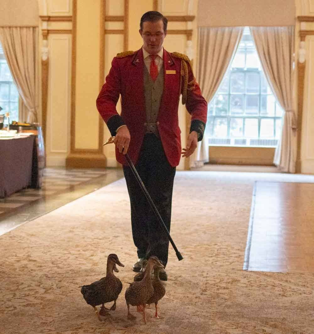 Duck Parade at the Peabody Hotel in Memphis