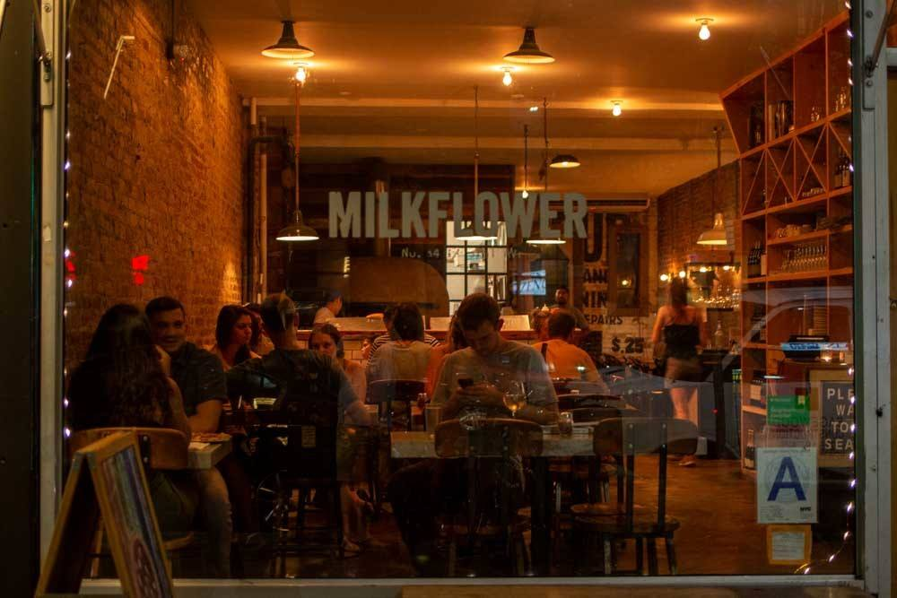 Milkflower in Queens