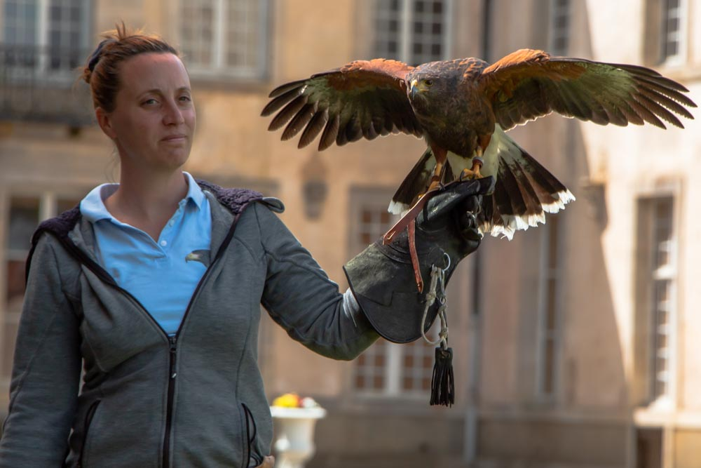 Falconry at Chateau de Commarin in Burgundy France