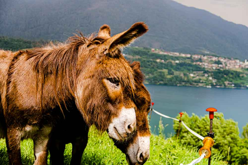 Donkey at Il Leprotto Bisestile in Trentino