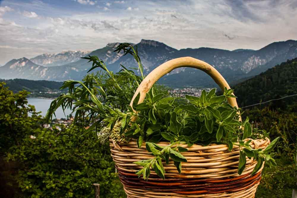 View at Il Leprotto Bisestile in Trentino