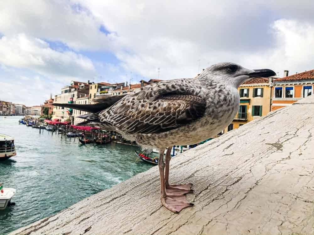 Bird in Venice