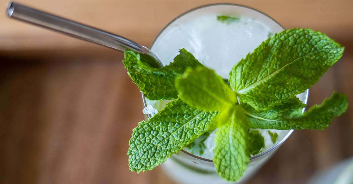Bacardi Mojito Recipe for a Taste of Cuba at Home